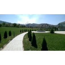 Озеленительная компания PLANTS
