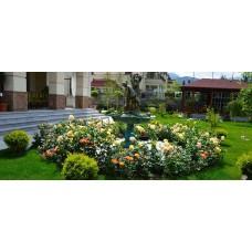 Проектирование и создание розариев посадка роз в саду